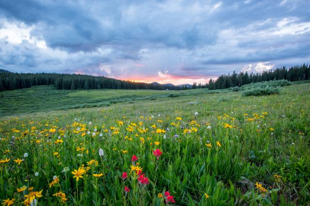 A photo of a field of many yellow flowers and a few red ones